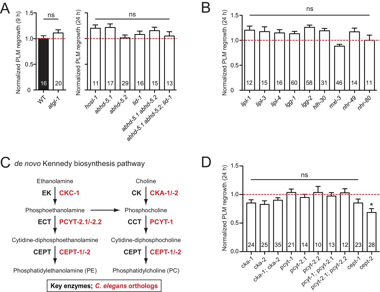 Expanded genetic screening in Caenorhabditis elegans