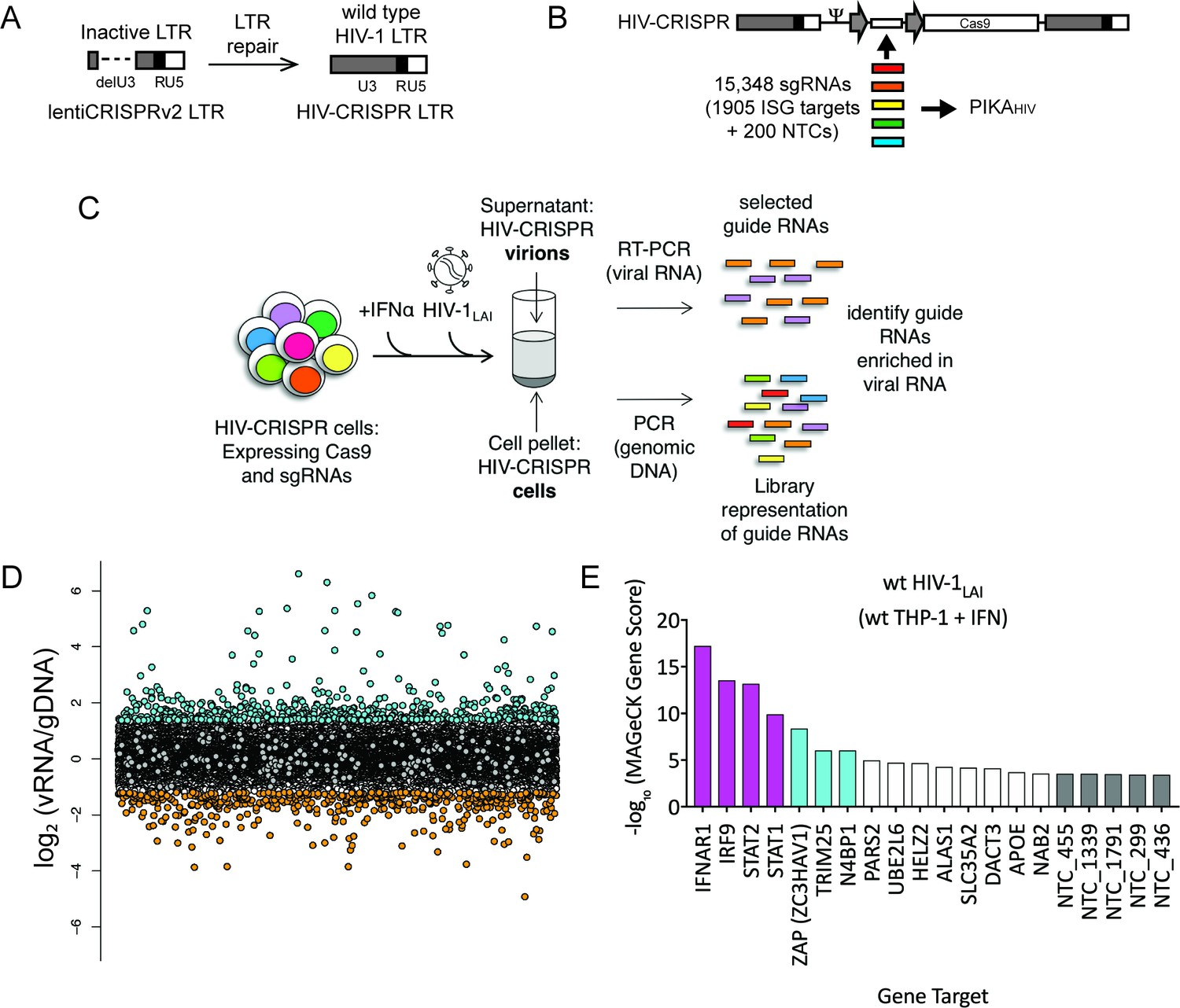 109ec2bdd The HIV-CRISPR screen identifies gene knockouts that increase and decrease  HIV infection.