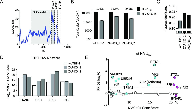 b82c692d9 Iterative screening in ZAP-KO THP-1 cells Identifies IFNα-induced  Inhibitors of HIV Replication.