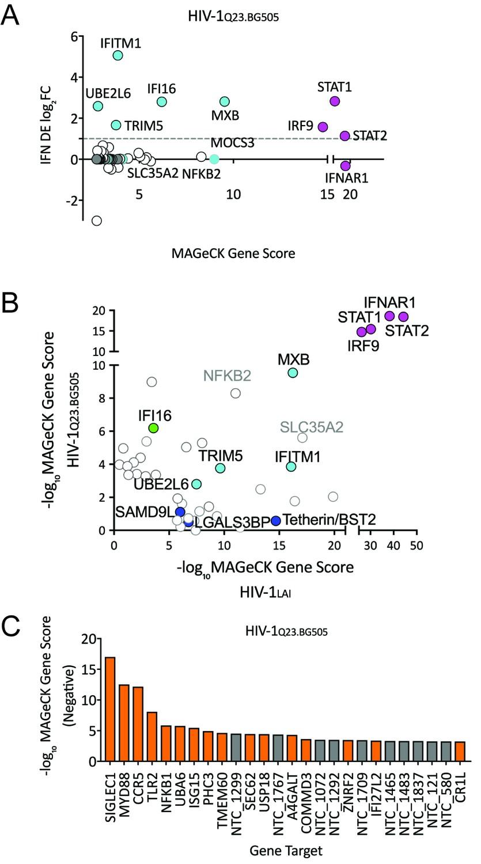 A virus-packageable CRISPR screen identifies host factors