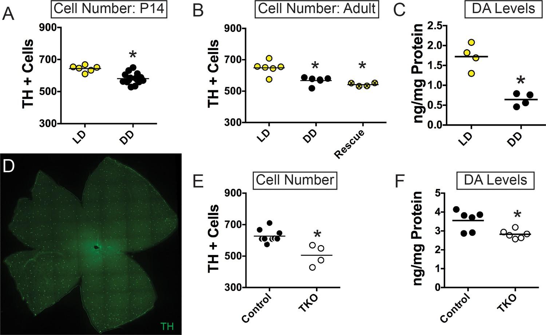 Light-dependent pathways for dopaminergic amacrine cell development