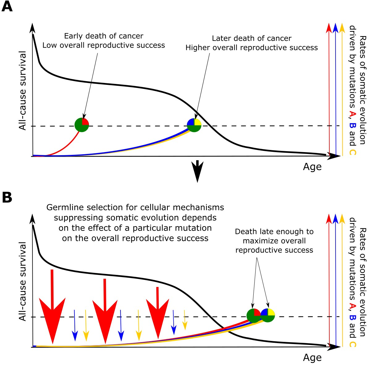 A generalized theory of age-dependent carcinogenesis | eLife