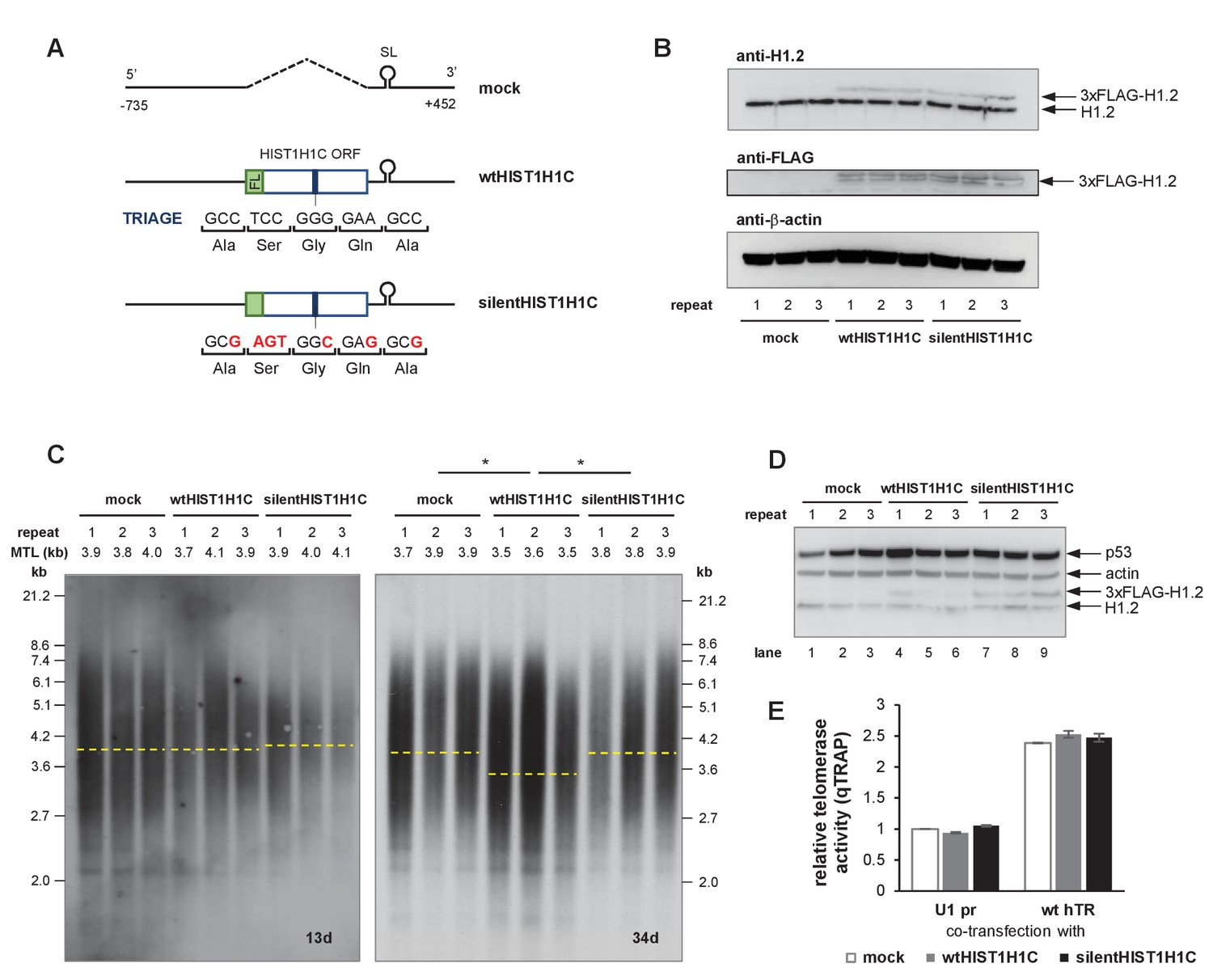 The RNA interactome of human telomerase RNA reveals a coding