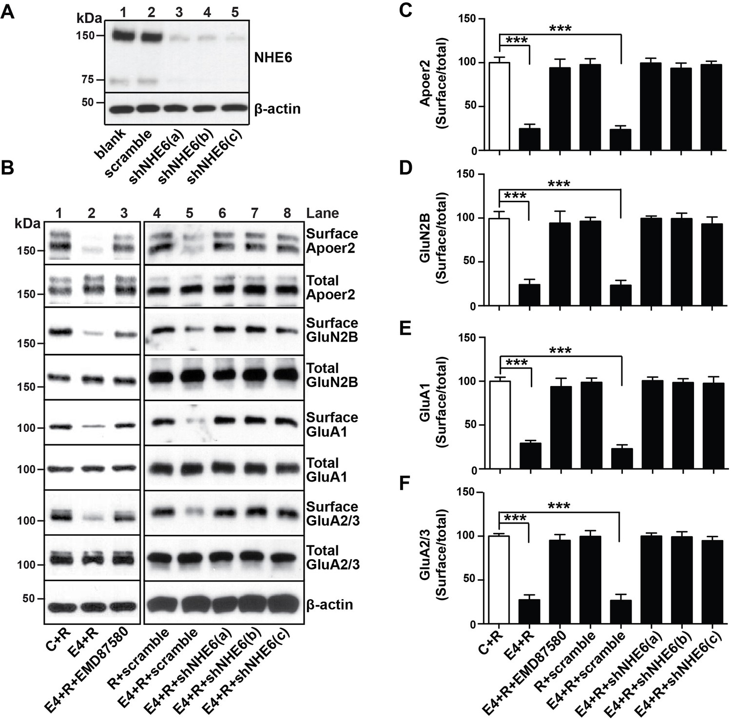 Reversal of ApoE4-induced recycling block as a novel