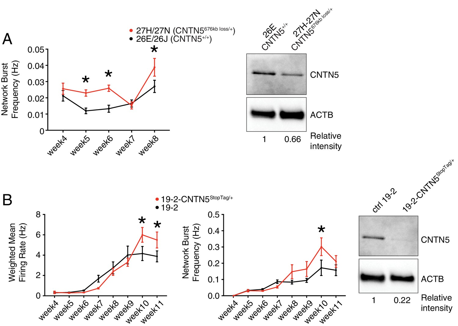 CNTN5-/+or EHMT2-/+ iPSC-derived neurons from individuals with ... on