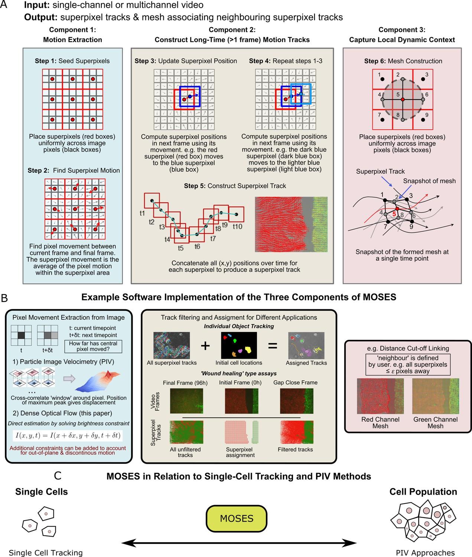 4ad3cc952d65 Motion sensing superpixels (MOSES) is a systematic computational ...