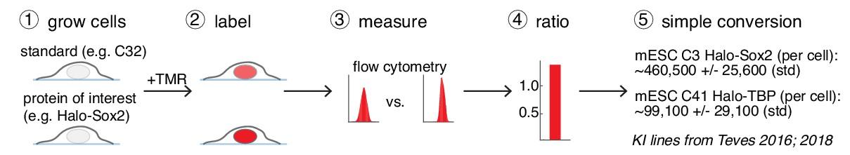Determining cellular CTCF and cohesin abundances to