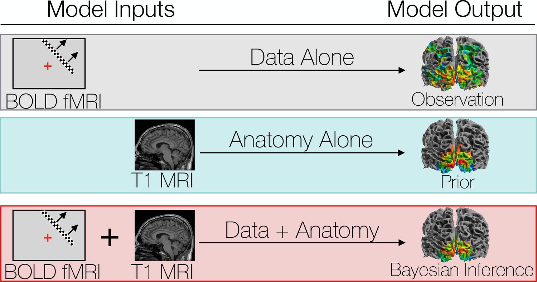 Bayesian analysis of retinotopic maps   eLife
