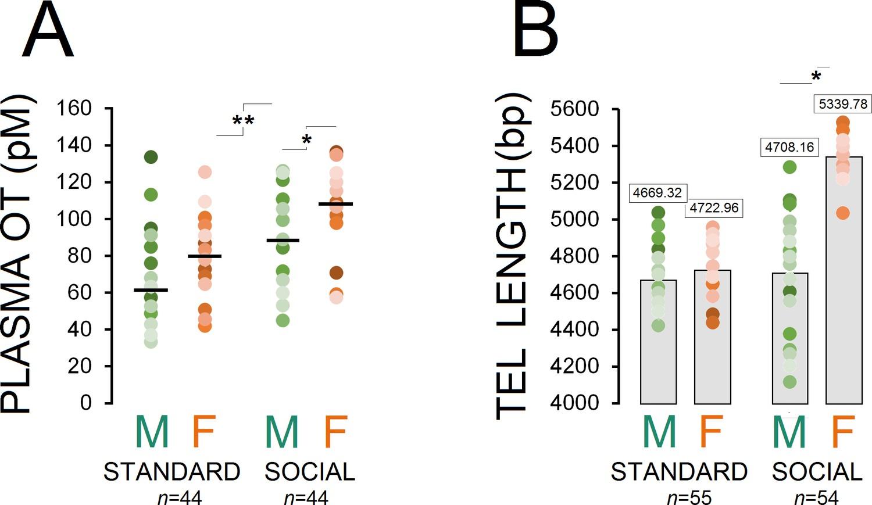 Oxytocin Found To Stimulate Social >> Oxytocin Mediated Social Enrichment Promotes Longer