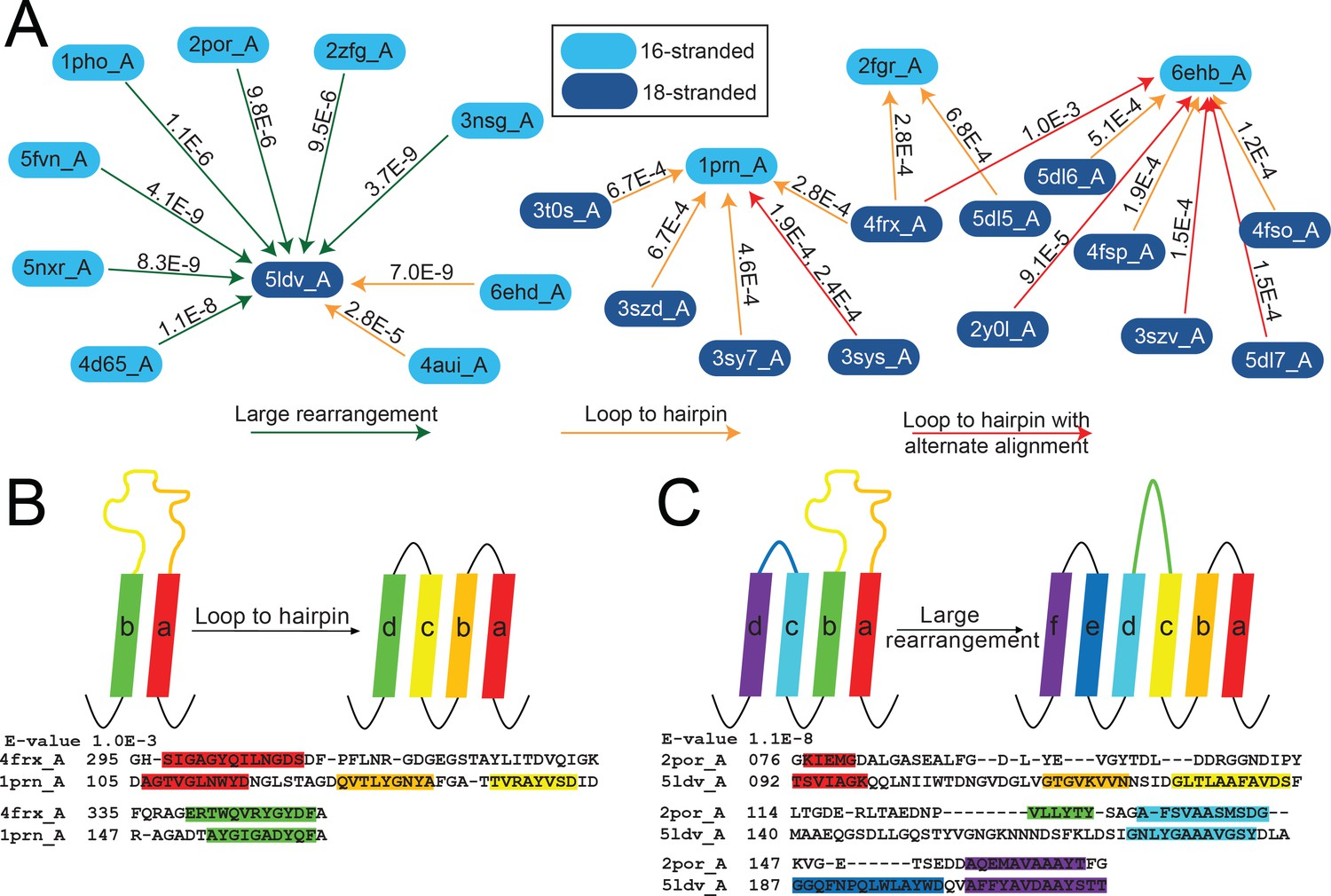 Evolutionary pathways of repeat protein topology in