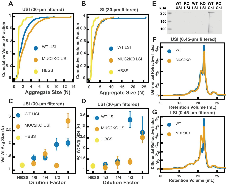 High-molecular-weight polymers from dietary fiber drive