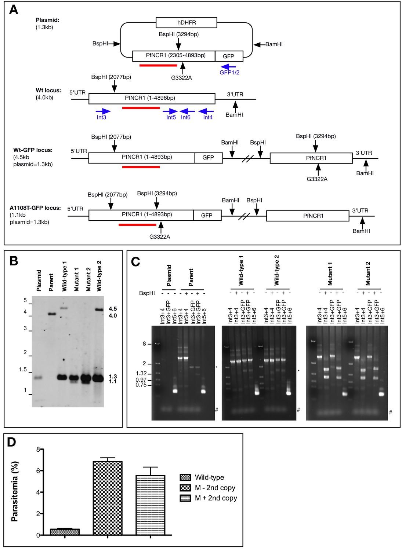 fb38e6e9781fb8 Plasmodium Niemann-Pick type C1-related protein is a druggable ...