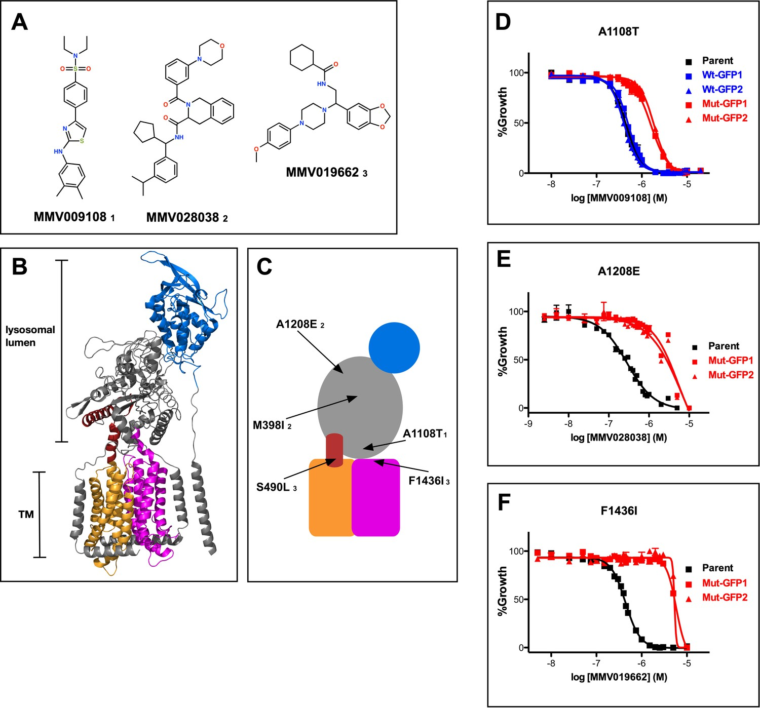 116689e08c7188 Mutations in PfNCR1 confer resistance to three antimalarial compounds.
