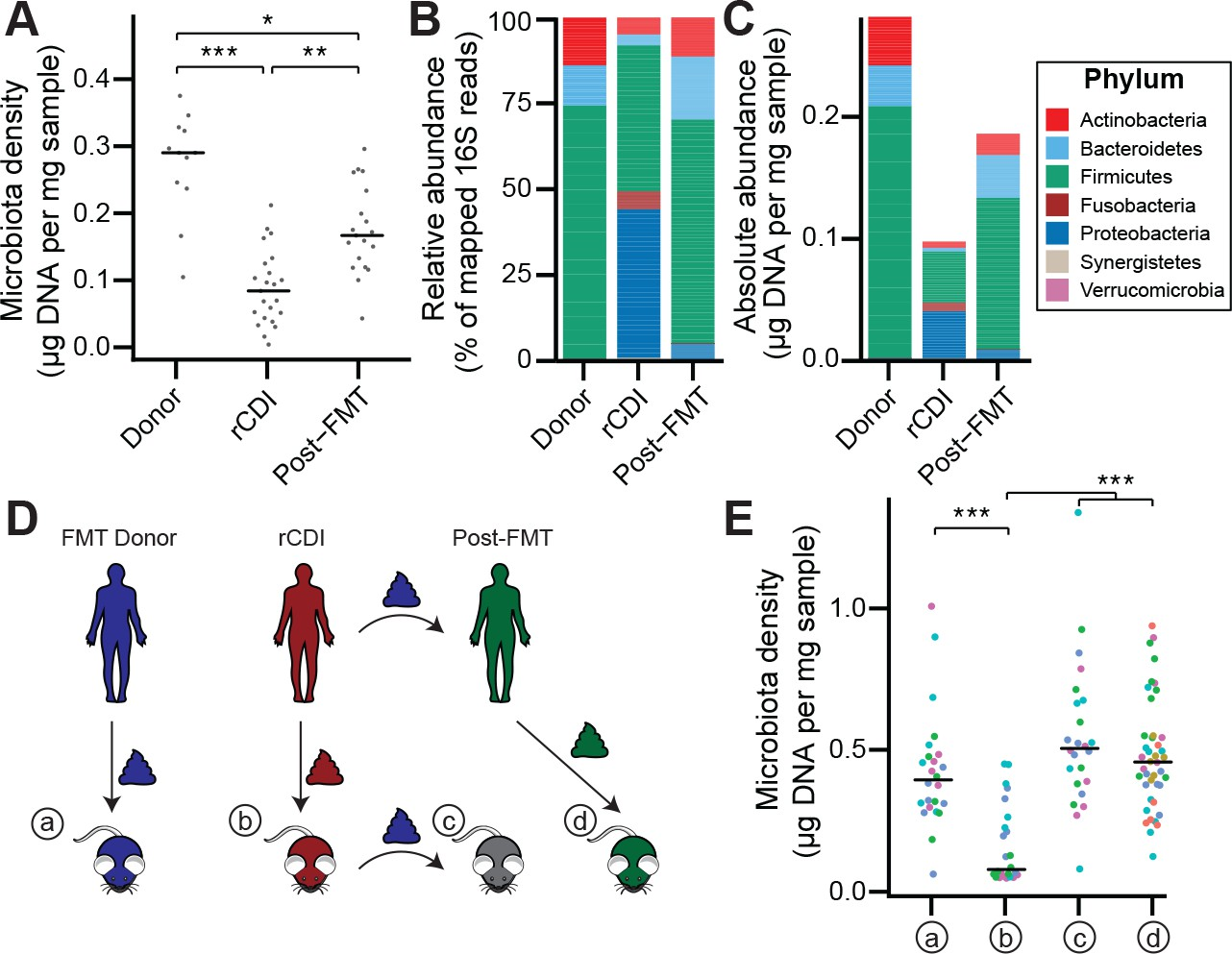 Gut microbiota density influences host physiology and is