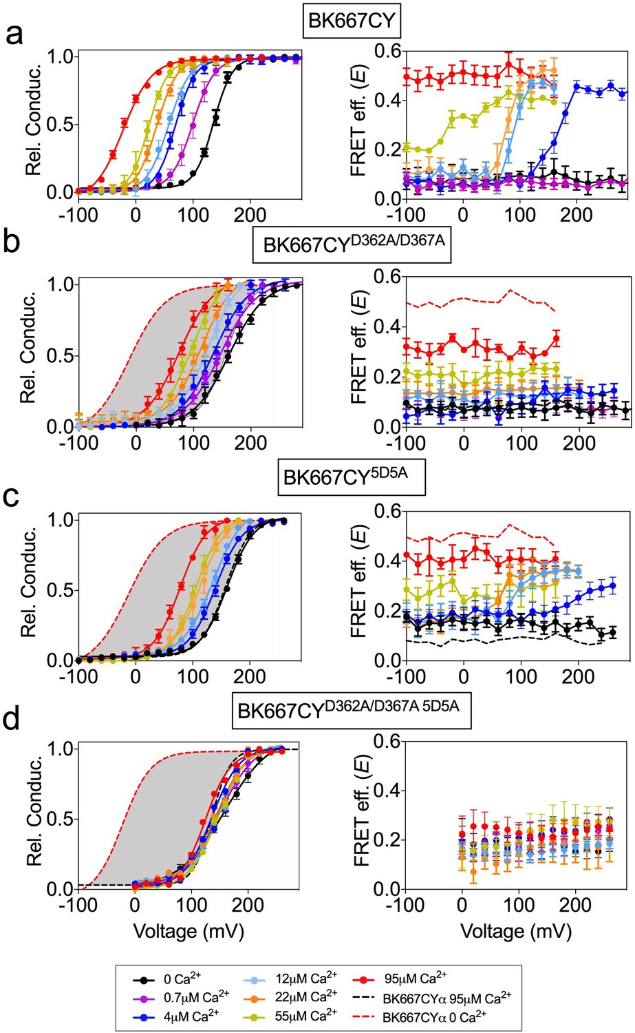 Voltage-dependent dynamics of the BK channel cytosolic