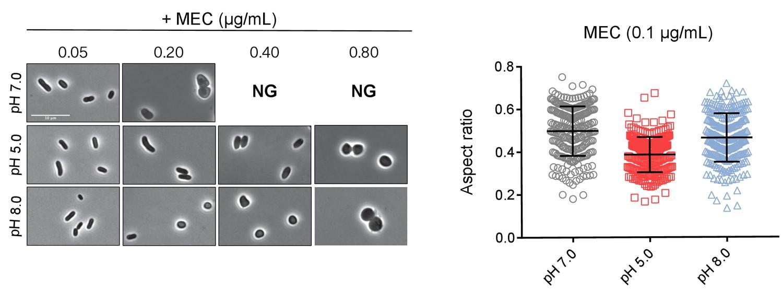Plasticity of Escherichia coli cell wall metabolism promotes