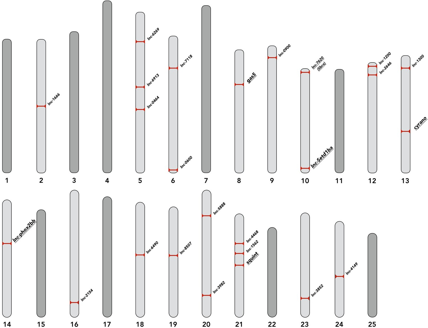Individual long non-coding RNAs have no overt functions in