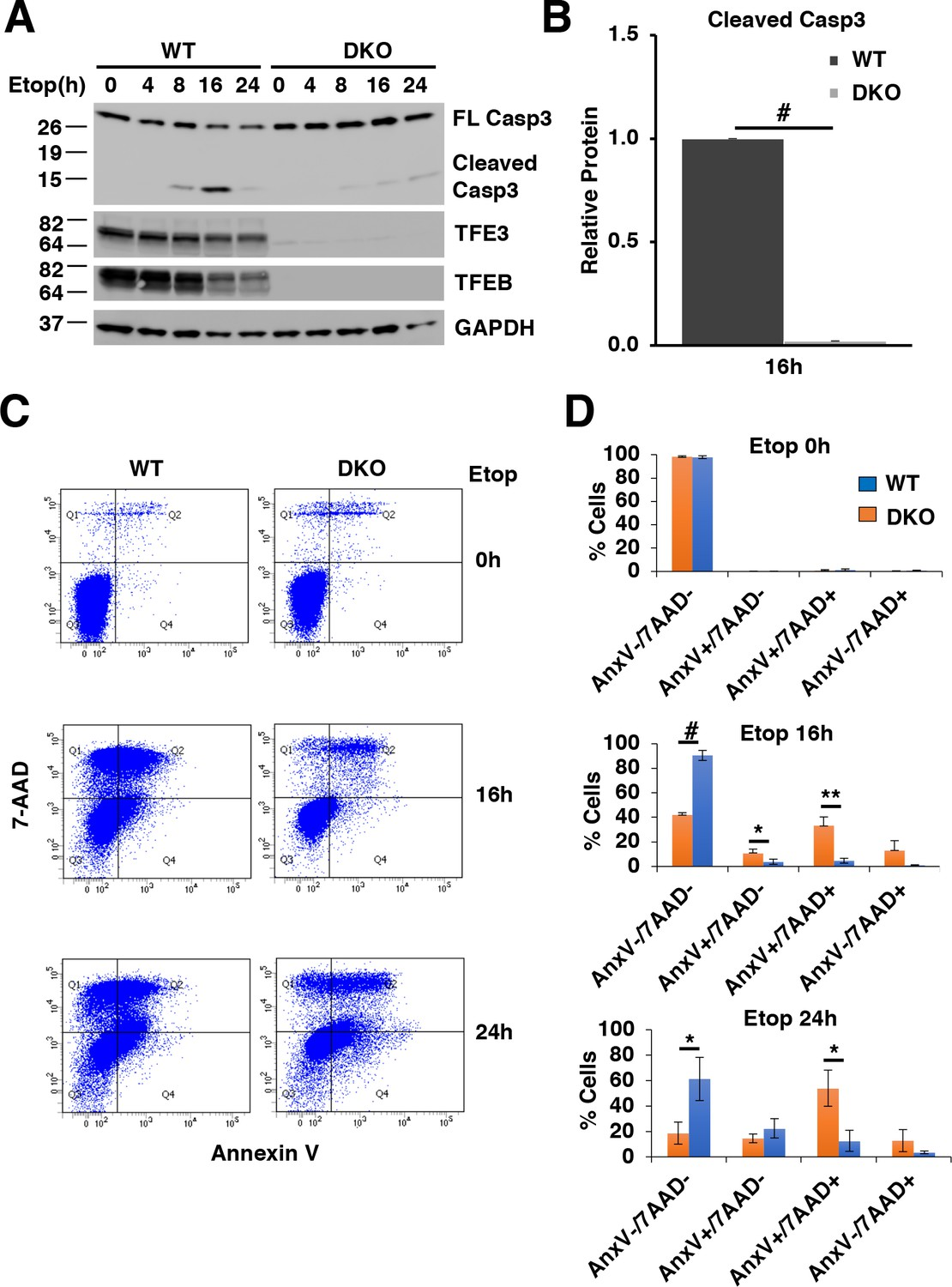 the transcription factors tfe3 and tfeb amplify p53