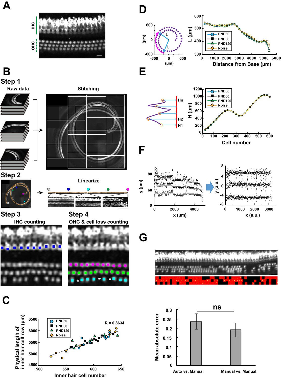 Cellular cartography of the organ of Corti based on optical tissue