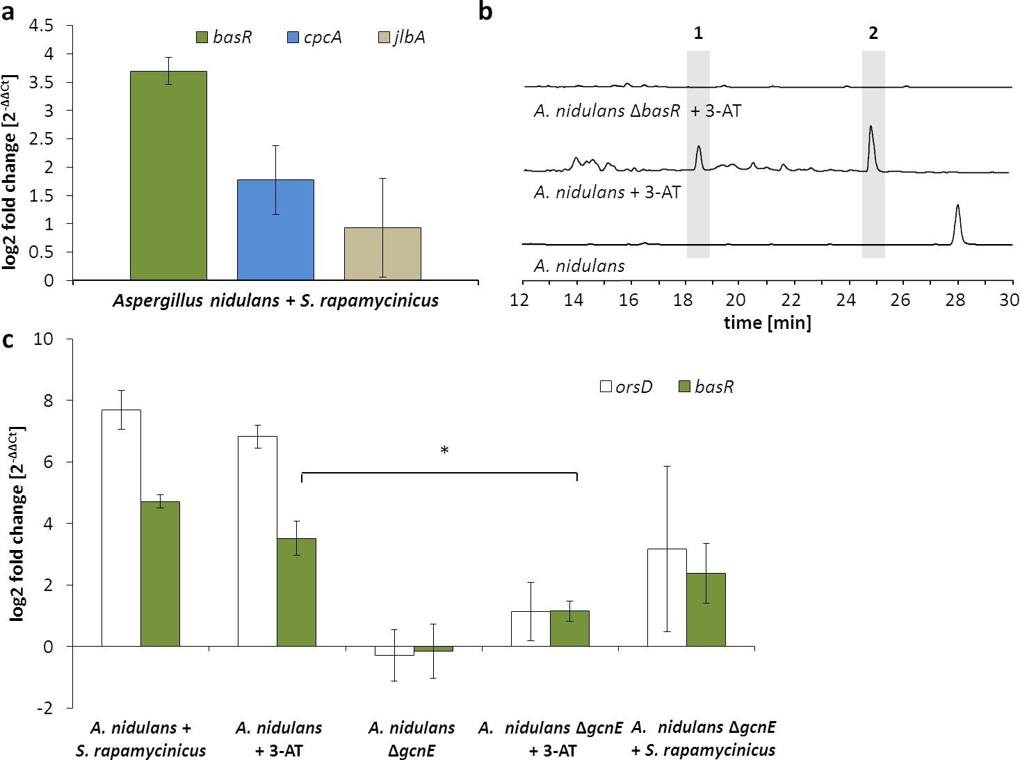 Chromatin mapping identifies BasR, a key regulator of