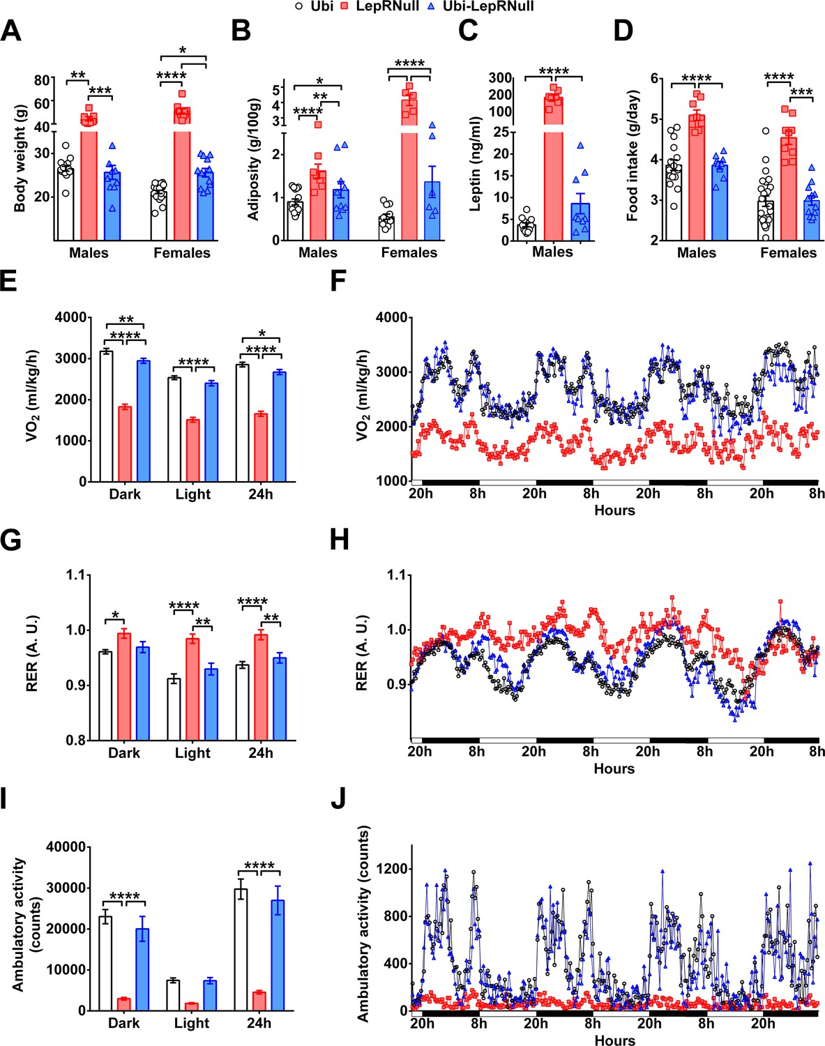 Long-term consequences of the absence of leptin signaling in early