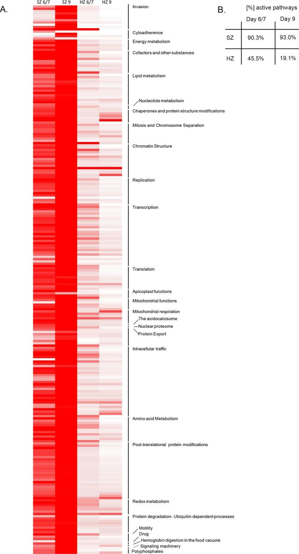 Transcriptomic analysis reveals reduced transcriptional