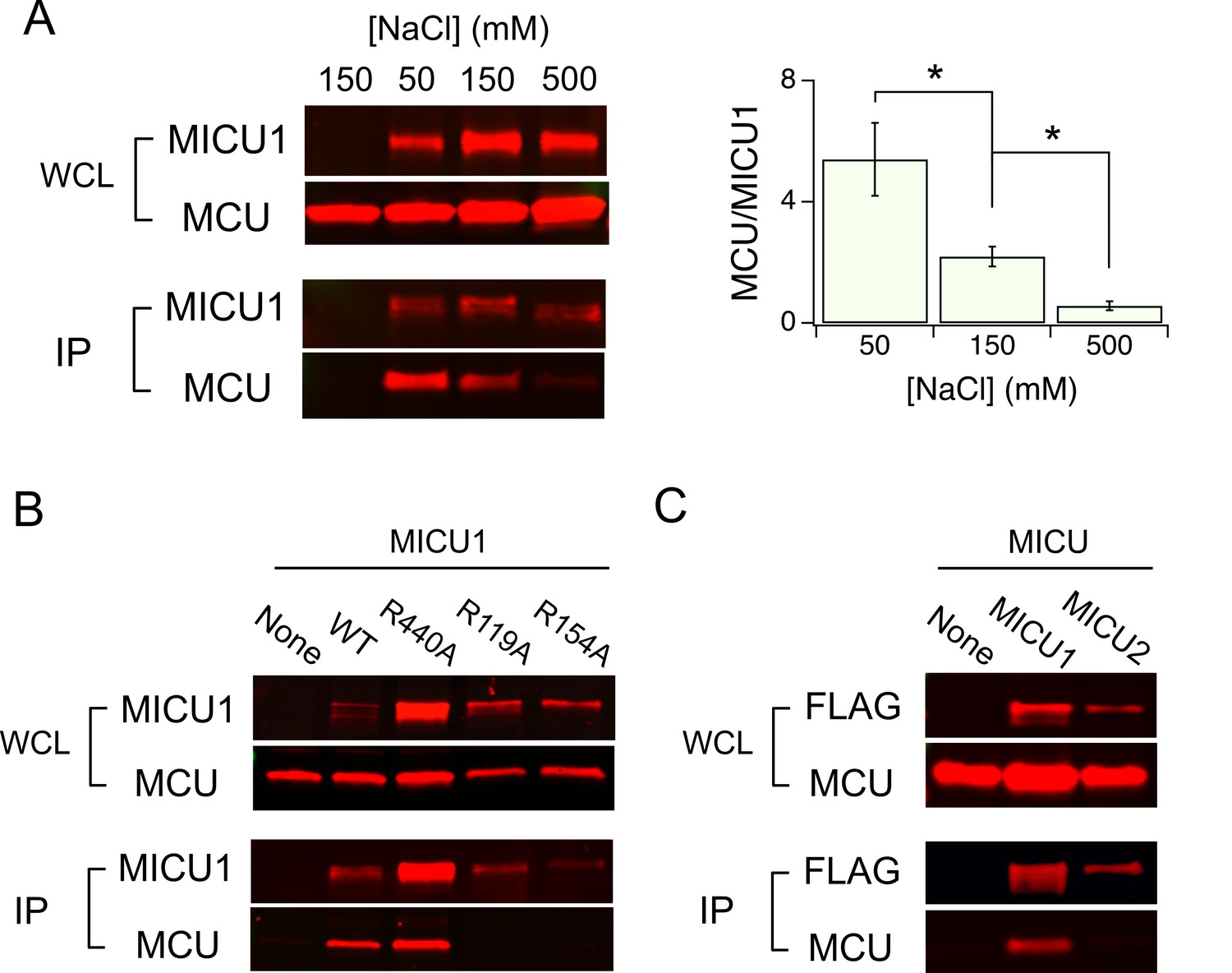The conserved aspartate ring of MCU mediates MICU1 binding and