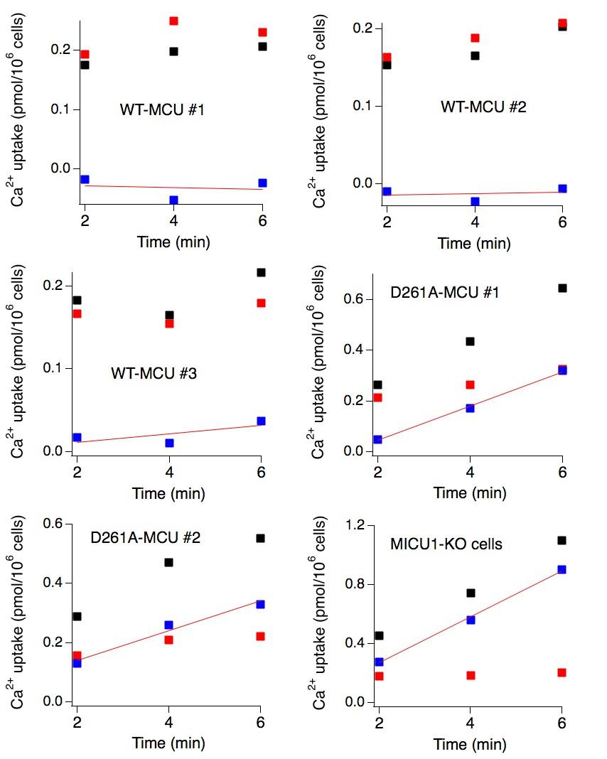 The conserved aspartate ring of MCU mediates MICU1 binding