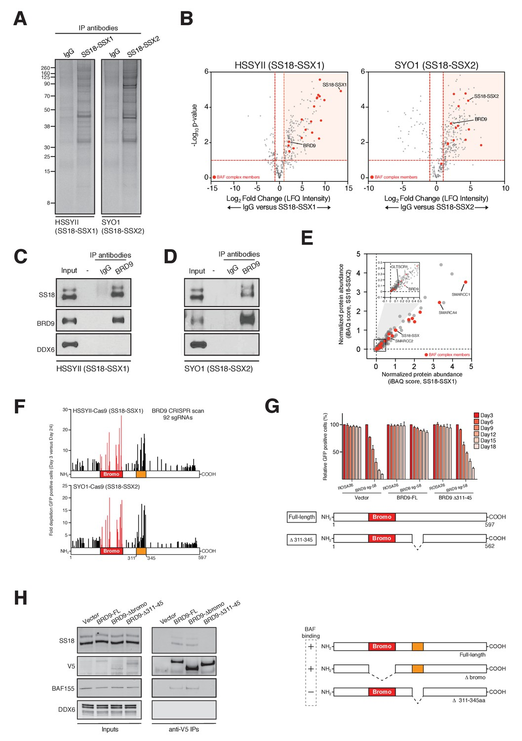 Targeted Degradation Of Brd9 Reverses Oncogenic Gene Expression In How To Draw Volcano Diagram Page 2 Functions As Part Ss18 Ssx Containing Swi Snf Complexes