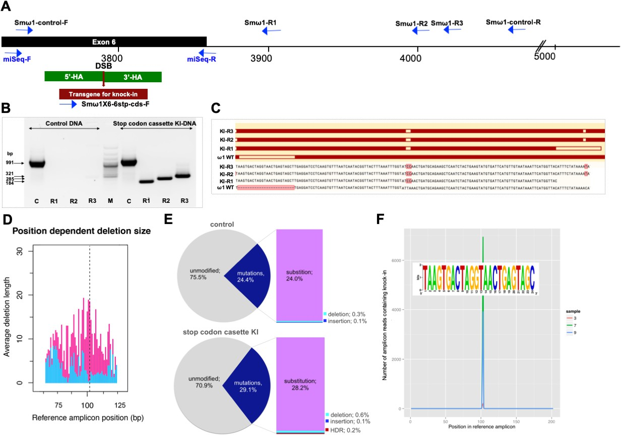 Programmed genome editing of the omega-1 ribonuclease of the