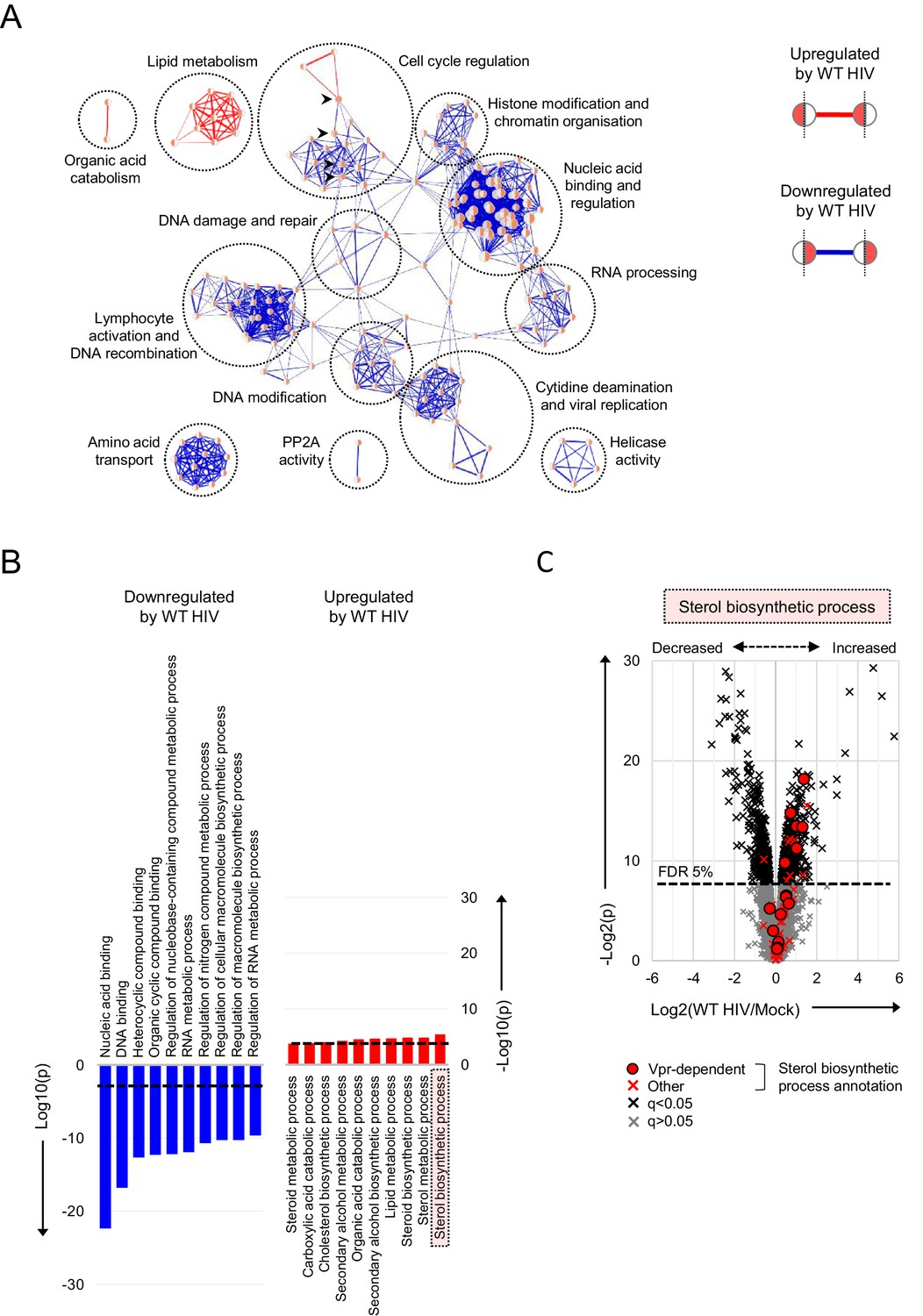 Functional proteomic atlas of HIV infection in primary human