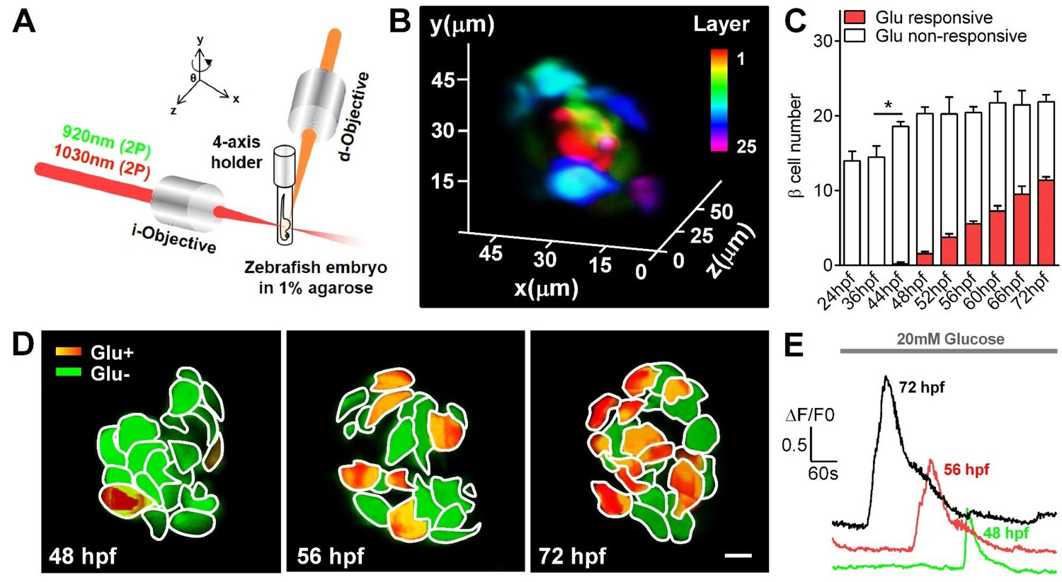 In vivo imaging of β-cell function reveals glucose-mediated