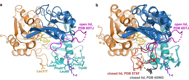 Kings Design Schapenleren Bank.Molecular Basis For Activation Of Lecithin Cholesterol
