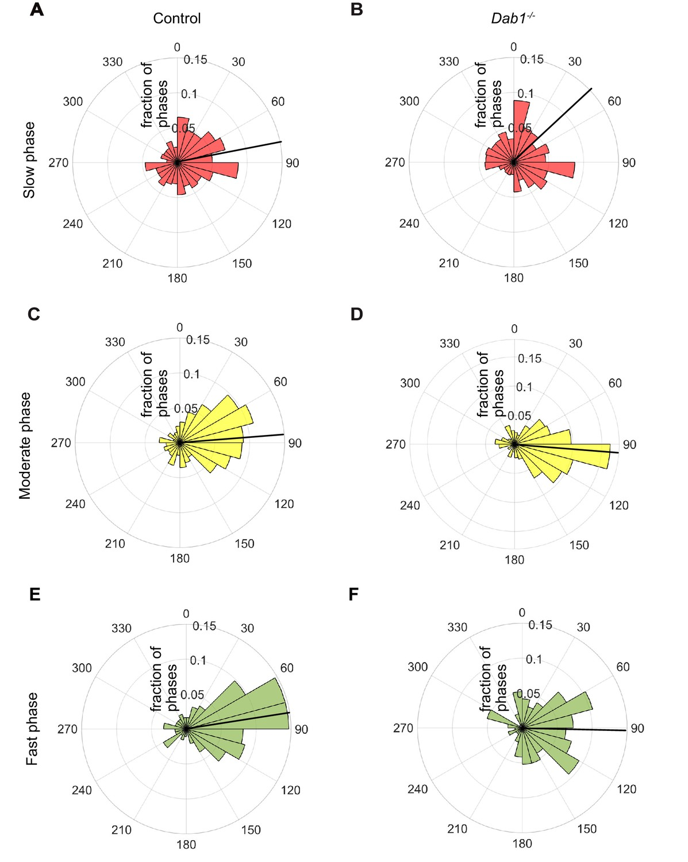 Correct setup of the substantia nigra requires Reelin-mediated fast