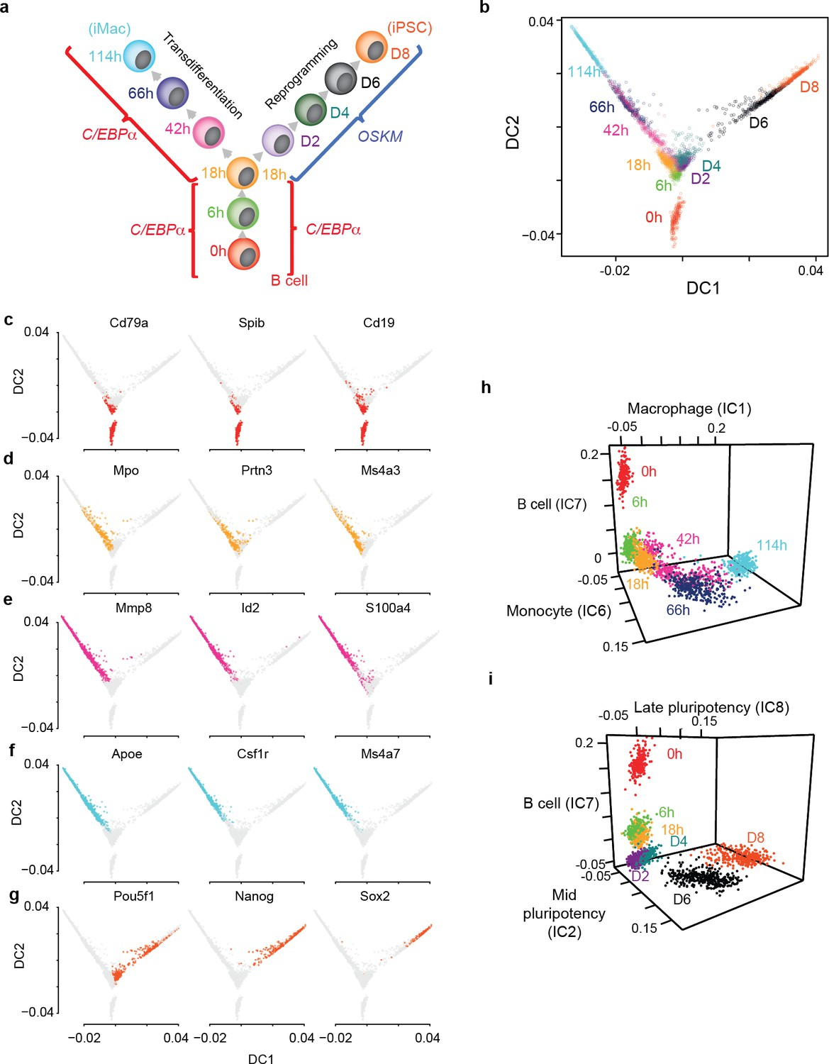 Single cell RNA-seq identifies the origins of heterogeneity