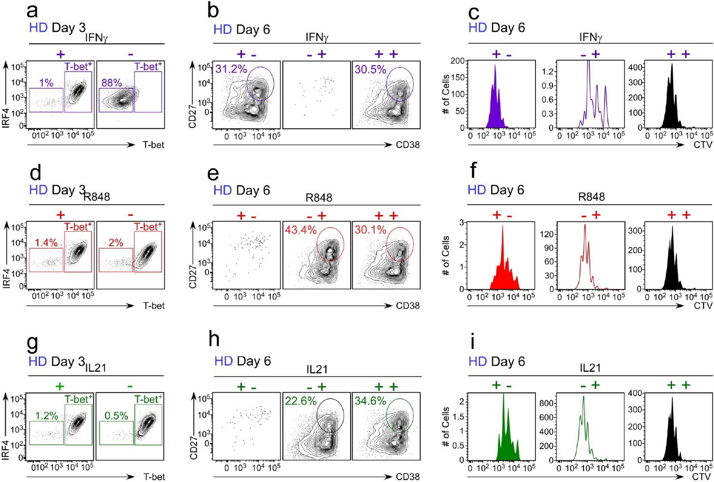 IFNγ induces epigenetic programming of human T-bethi B cells