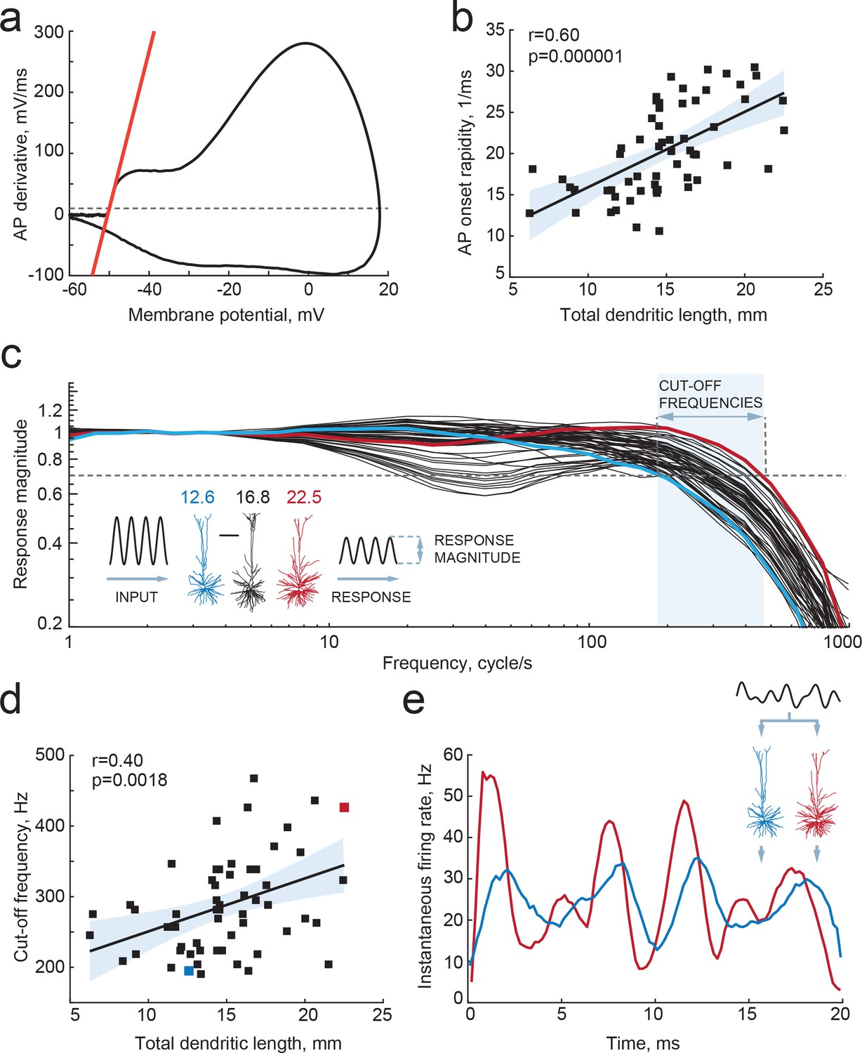 Large and fast human pyramidal neurons associate with intelligence