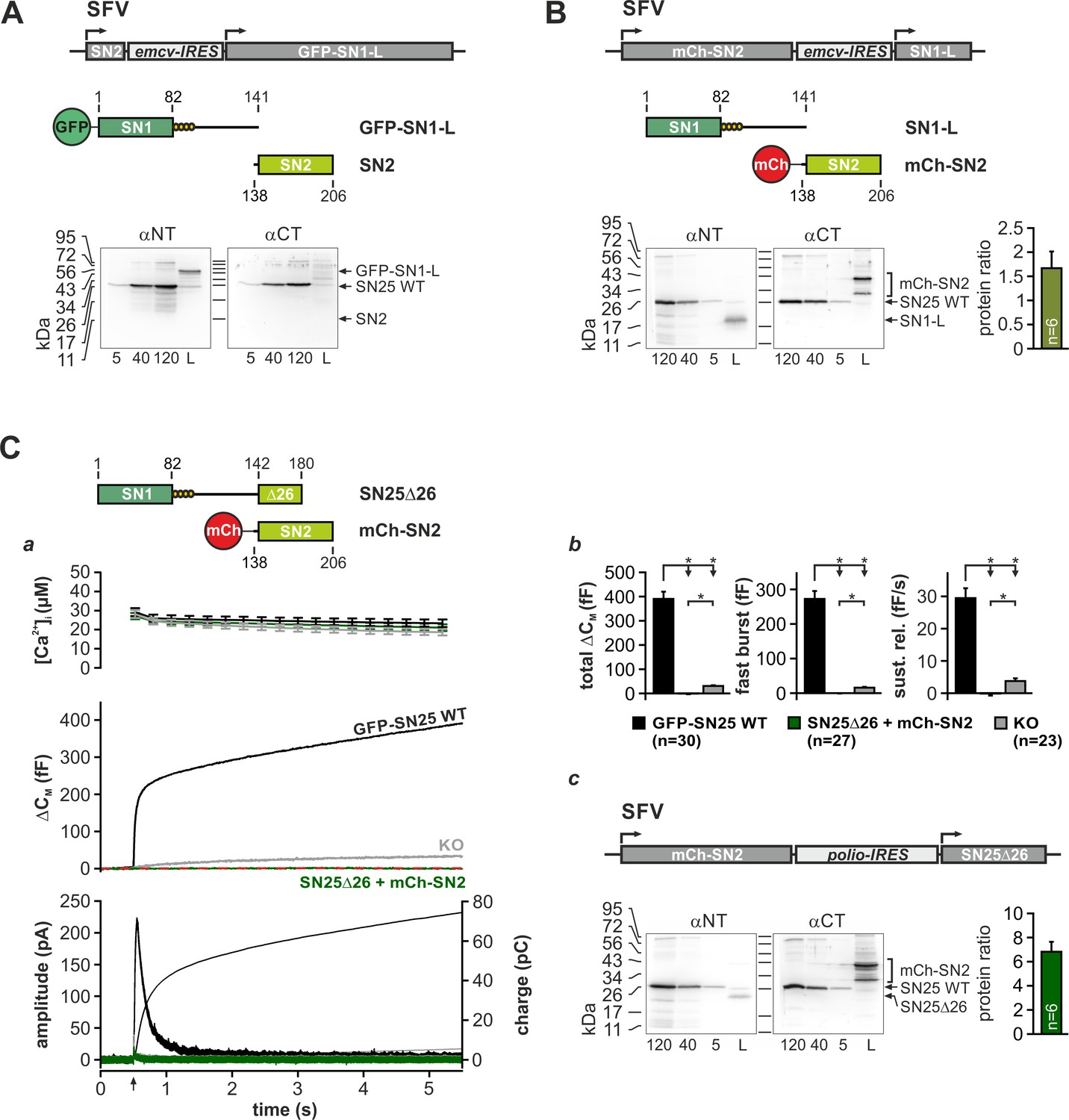 The SNAP-25 linker supports fusion intermediates by local lipid