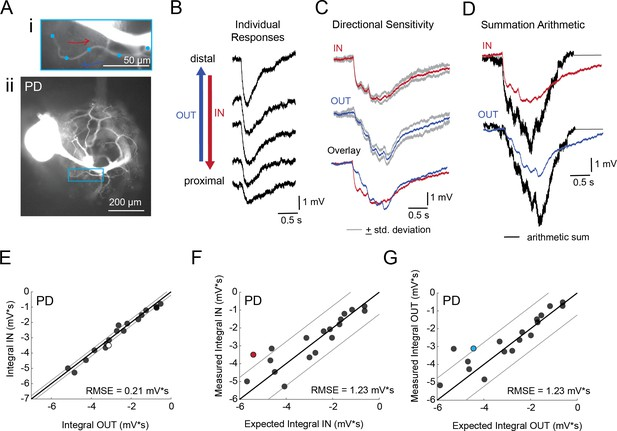 figures and data in neuronal morphologies built for reliable physiology in a rhythmic motor