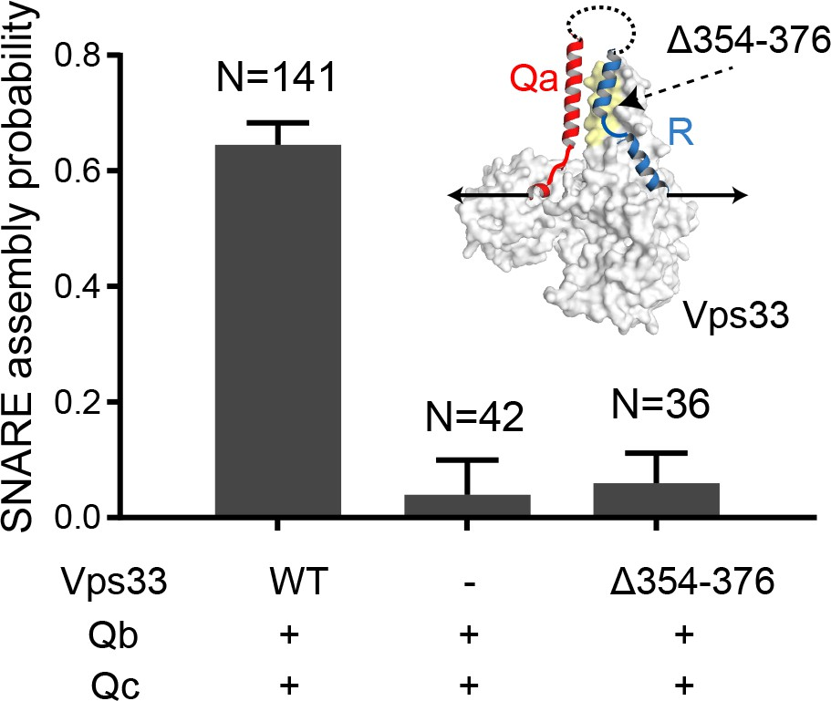 Munc18-1 catalyzes neuronal SNARE assembly by templating