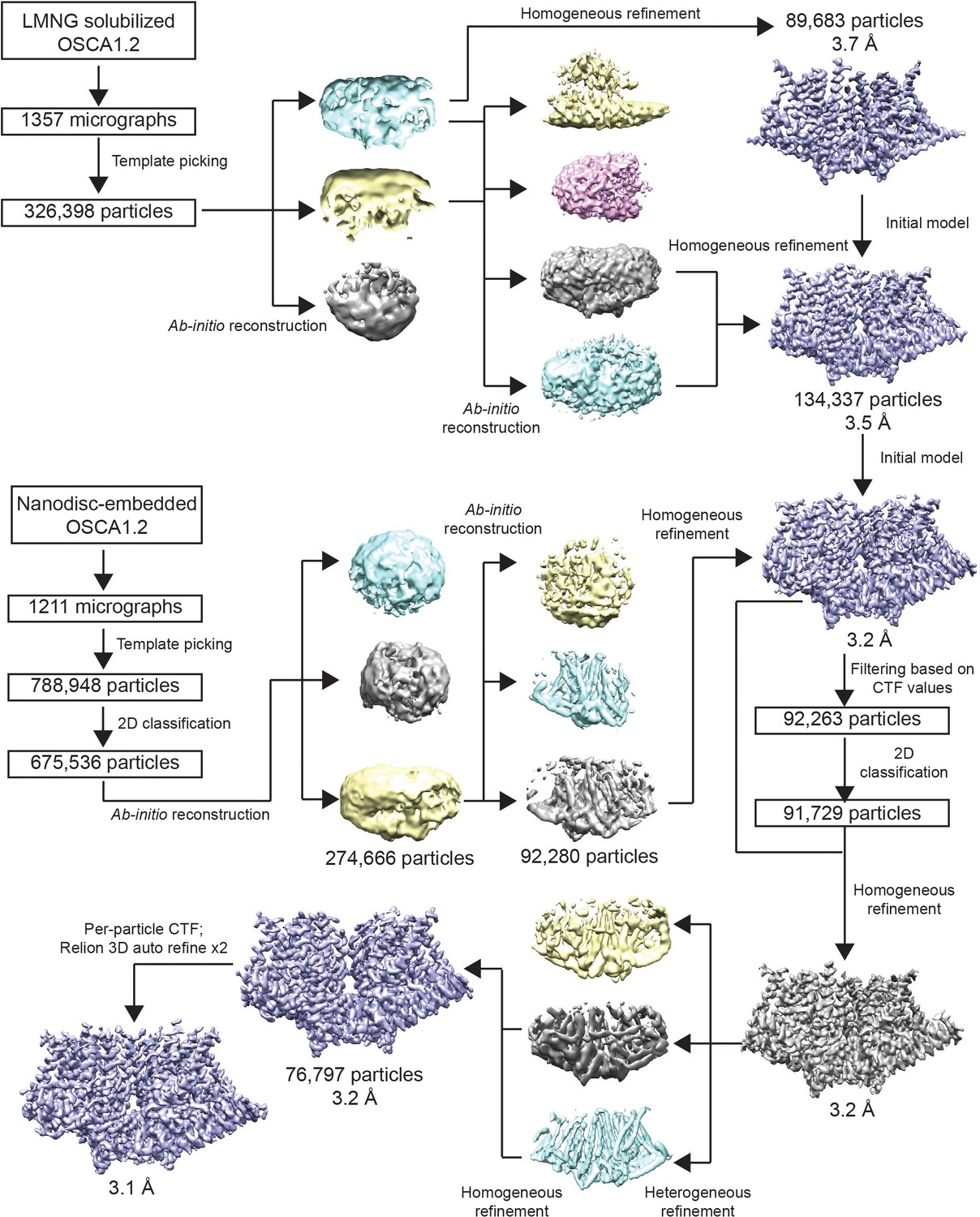 Figures and data in Cryo-EM structures of human ZnT8 in