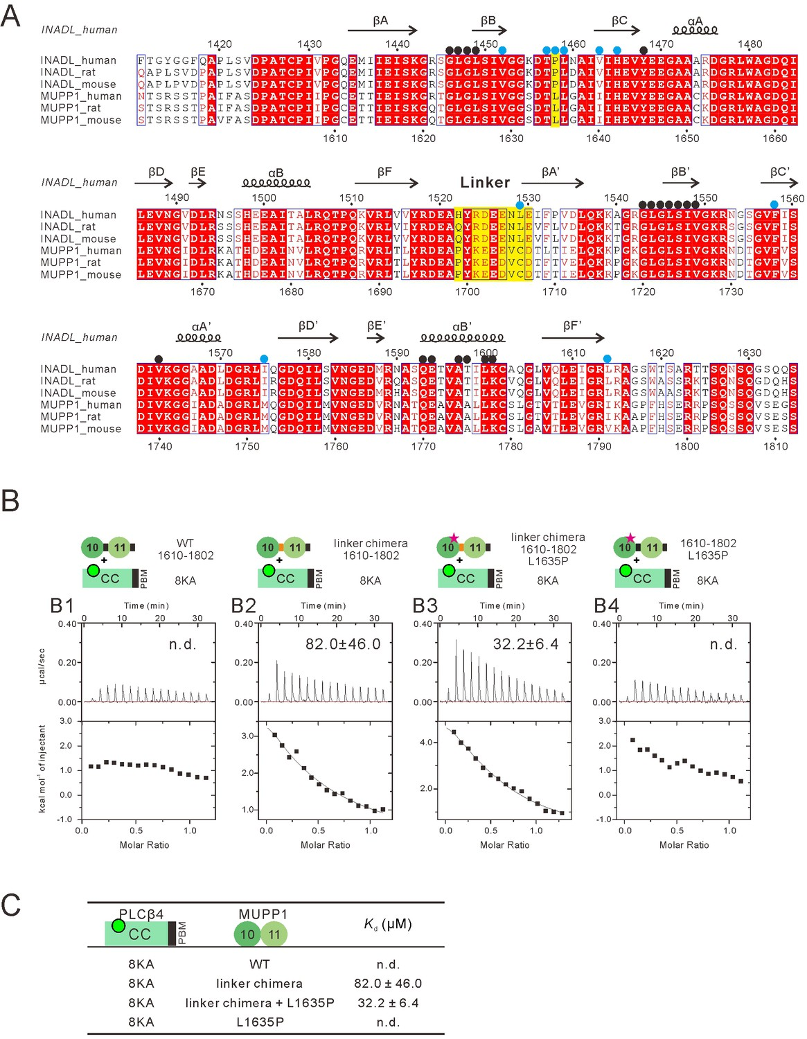 Figures and data in An unexpected INAD PDZ tandem-mediated ...