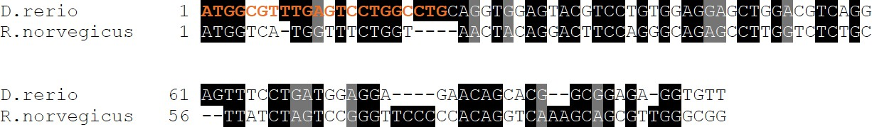 c27b087166091 Excerpt from sequence alignment of tmem63c mRNA zebrafish (NM 001159836) vs  Tmem63c mRNA rat (NM 001108045.1).
