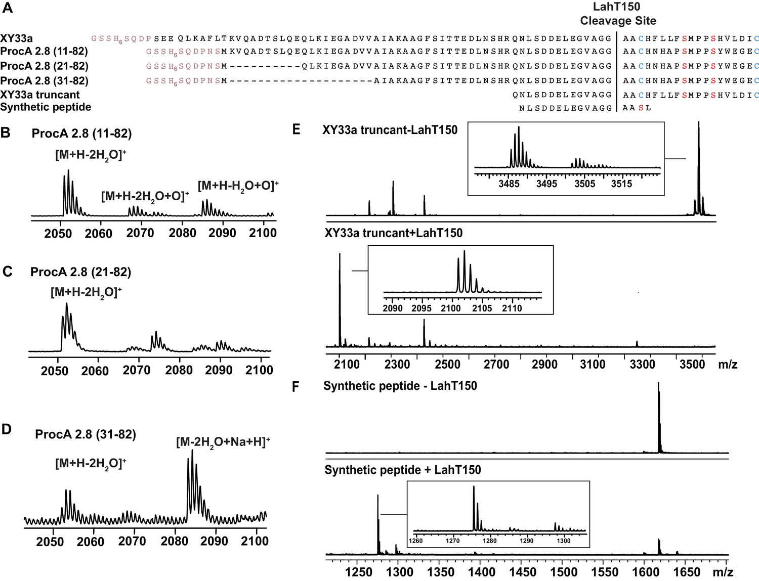 Insights into AMS/PCAT transporters from biochemical and structural