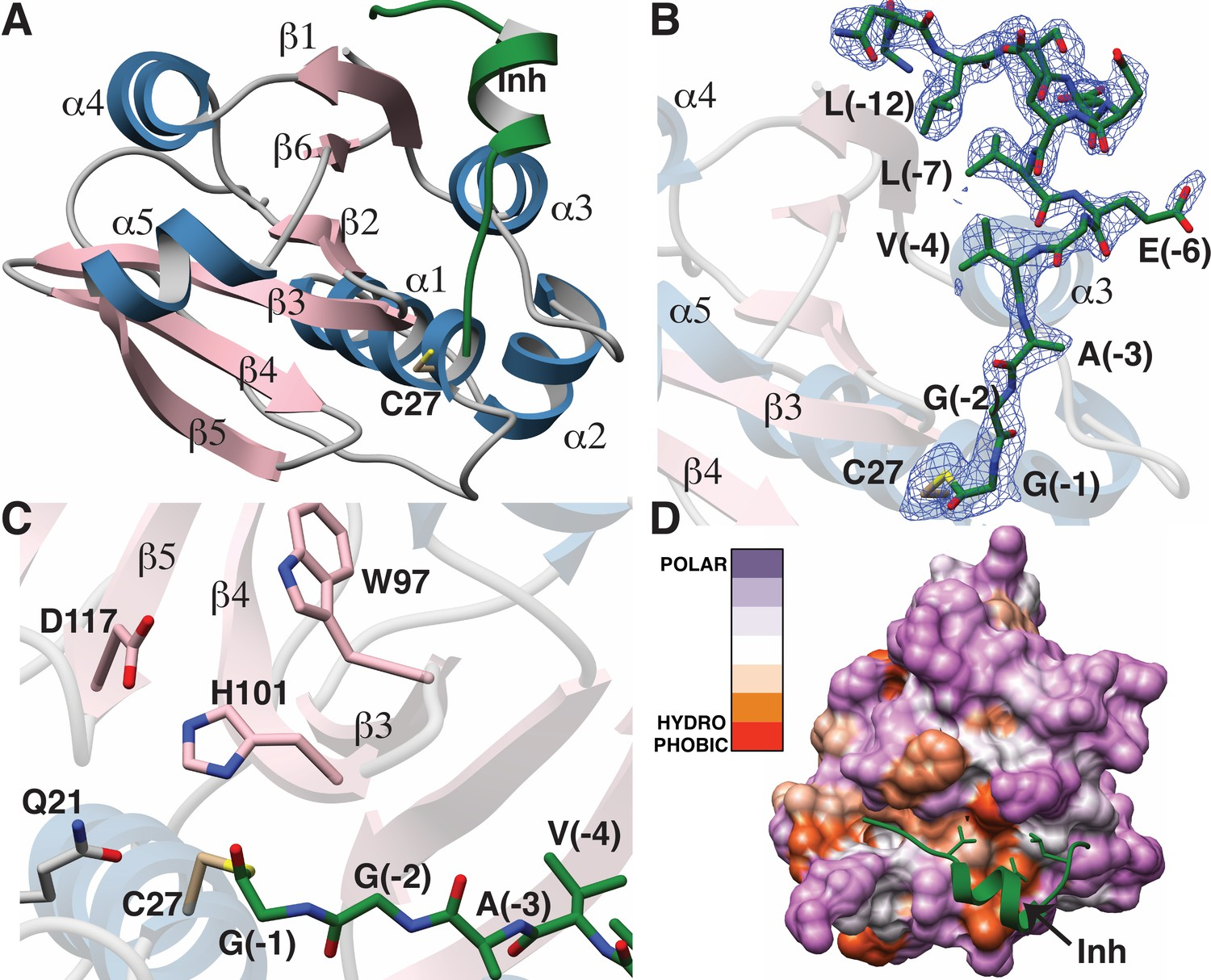 Insights into AMS/PCAT transporters from biochemical and