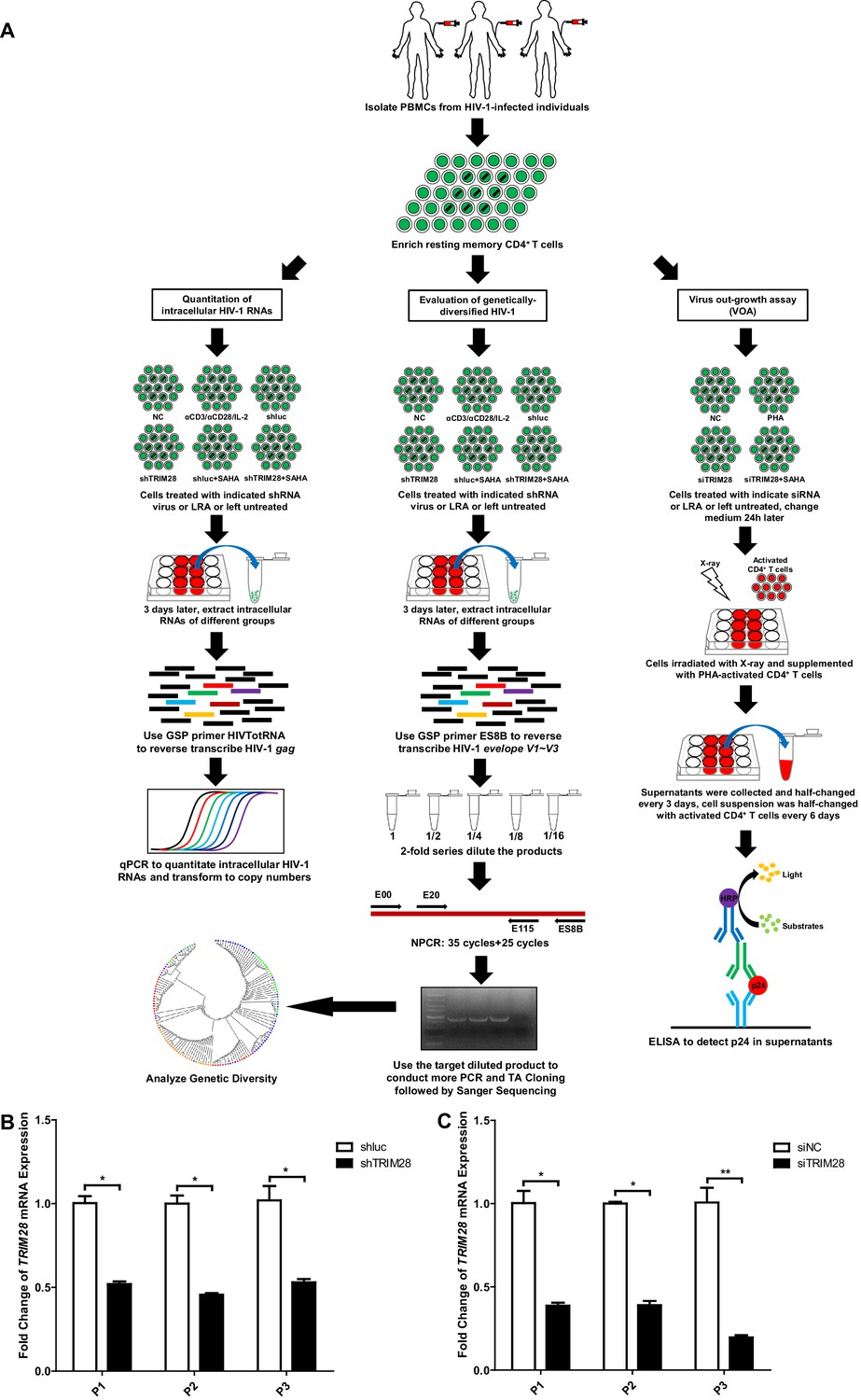 43741ca90 TRIM28 depletion reactivates latent HIV-1 in cells from HIV-1-infected  individuals.
