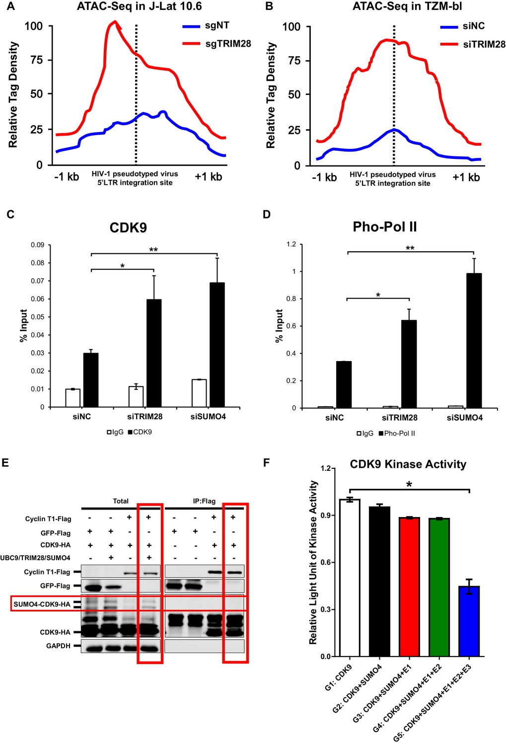 TRIM28 promotes HIV-1 latency by SUMOylating CDK9 and
