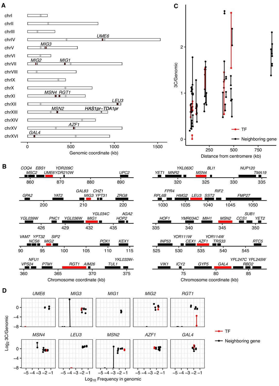 A combination of transcription factors mediates inducible