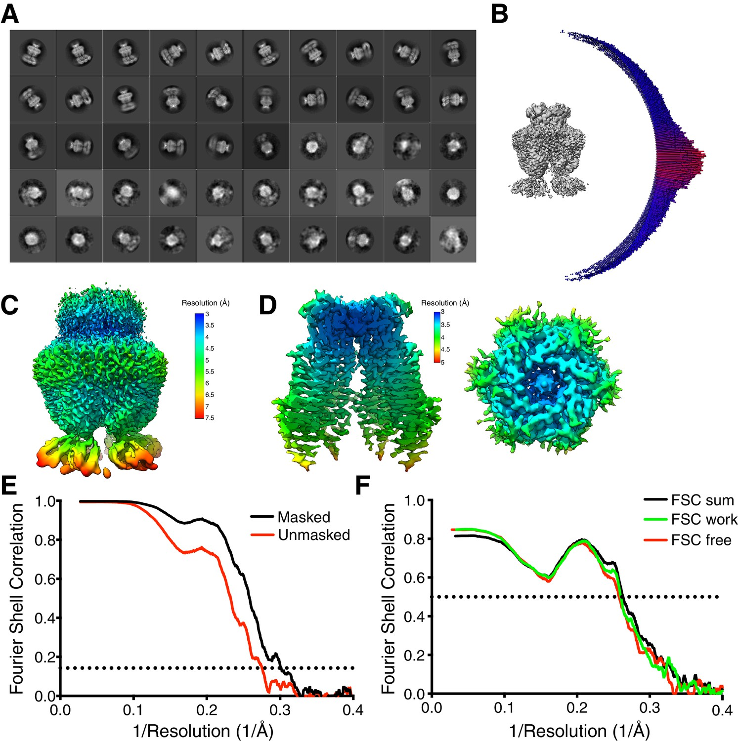 Cryo-EM structures of the DCPIB-inhibited volume-regulated
