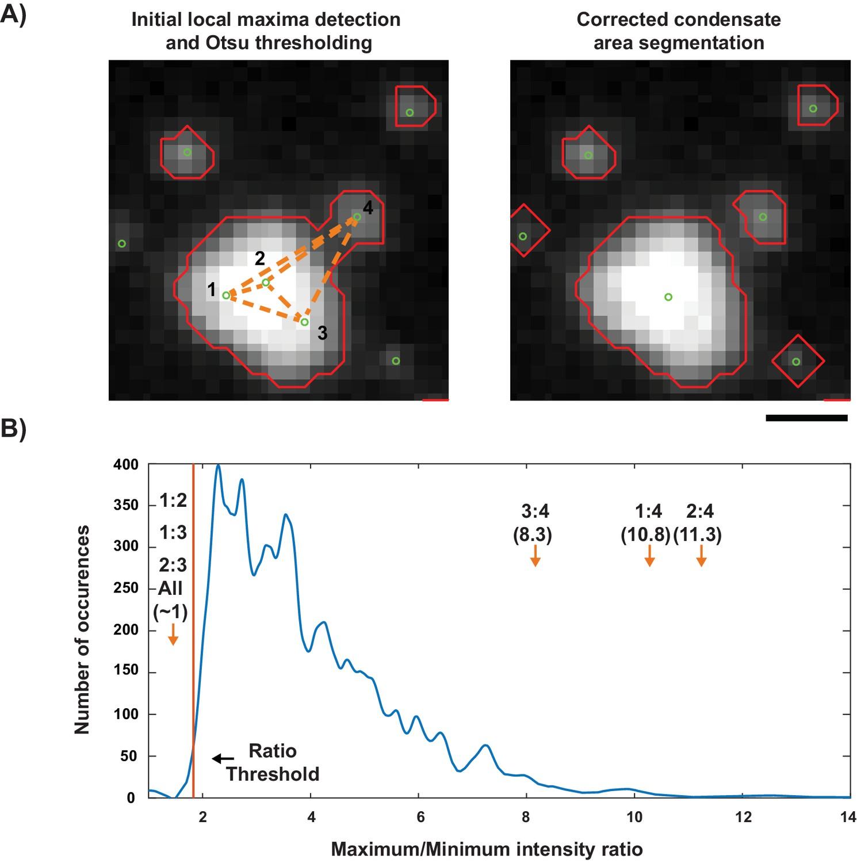 A composition-dependent molecular clutch between T cell signaling